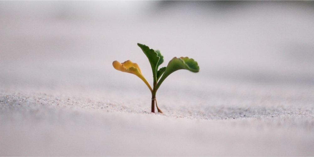 Jeremy Bishop, unsplash, trust sprout growing